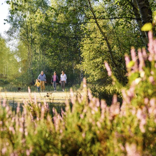 Ermenonville _ Forêt d' Ermenonville - © CRTC Hauts-de-France - Vincent Colin