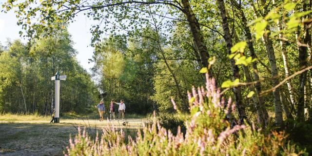 Ermenonville - Forêt d'Ermenonville ©CRTC Hauts-de-France - Vincent Colin