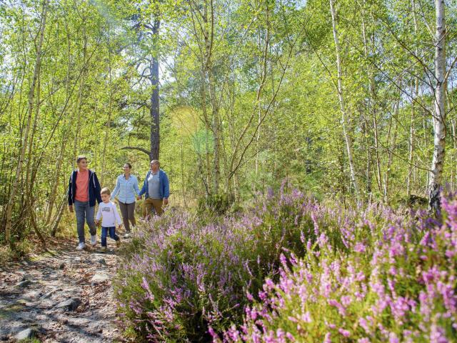Ermenonville, Forêt d'Ermenonville ©CRTC Hauts-de-France - Vincent Colin