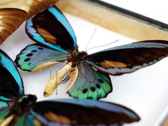 Saint-Quentin Musée des Papillons © CRTC Hauts-de-France - Ville de Saint-Quentin - Musée des Papillons