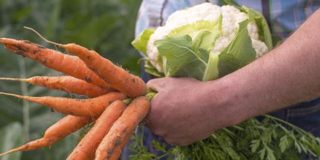 Légumes Bio © CRTC Hauts-de-France - Nicolas Bryant