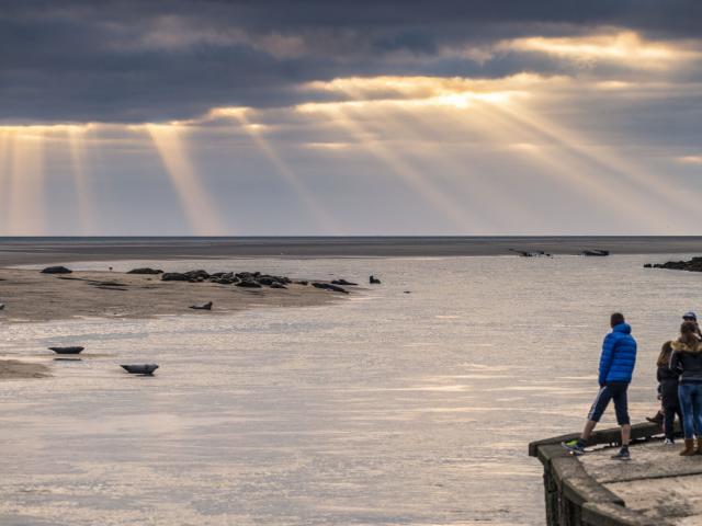 Berck-sur-Mer, observation des phoques © CRTC Hauts-de-France - Stéphane Bouilland