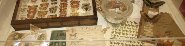 Saint-Quentin_Musée des Papillons © CRTC Hauts-de-France - Ville de Saint-Quentin - Musée des Papillons