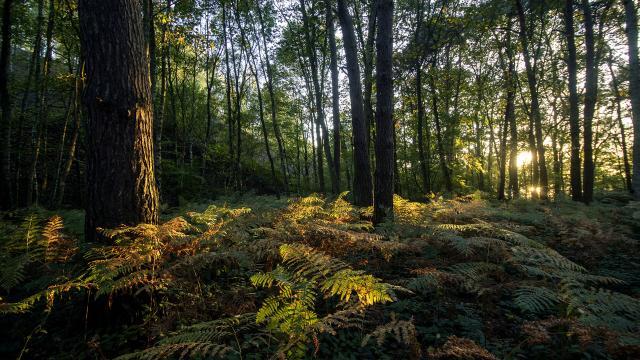 Saint-Amand-les-Eaux _Parc naturel régional Scarpe-Escaut _ La mare à Goriaux © CRTC Hauts-de-France - Sébastien Jarry
