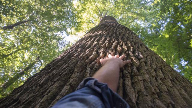 Forêt de Compiègne _ Promenade en Forêt de Compiègne © CRTC Hauts-de-France - Nicolas Bryant