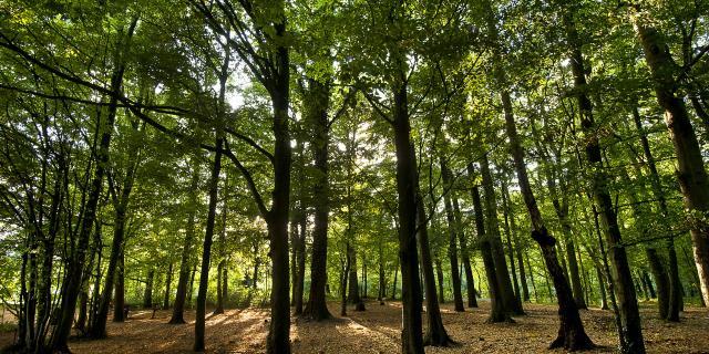Raismes _ Forêt Saint Amand Wallers - © CRTC Hauts-de-France - Sébastien Jarry