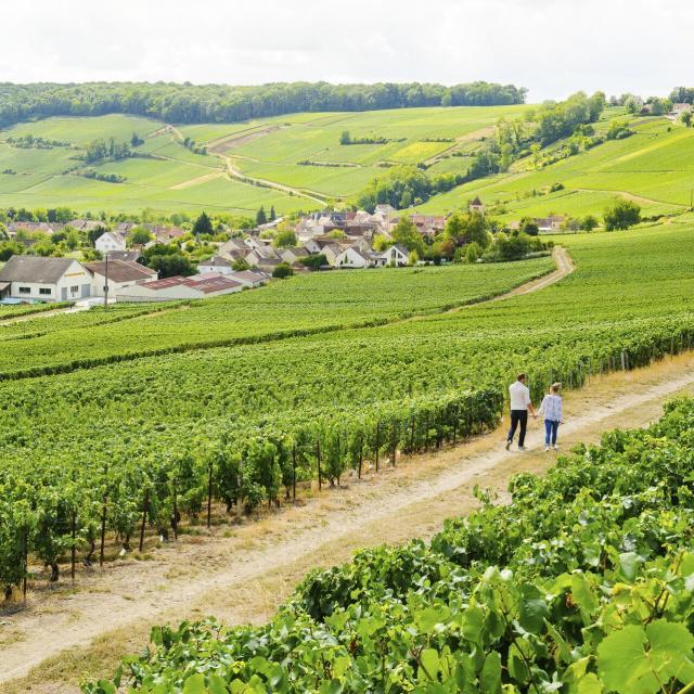 Aisne _ Randonnée dans le vignoble de champagne © CRTC Hauts-de-France - Vincent Colin
