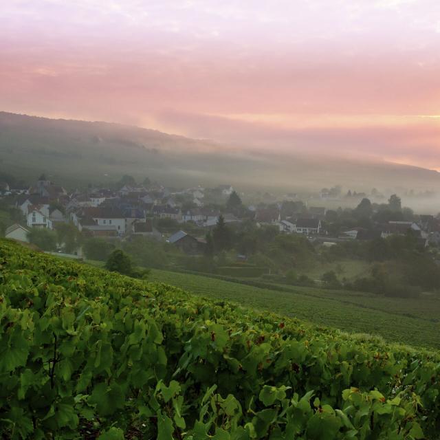 Azy-sur-Marne, sud de l'Aisne, point de vue de Bonneil sur le vignoble de Champagne ©CRTC Hauts-de-France - Anne-Sophie Flament