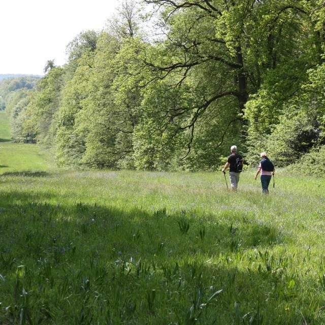 Villers-Cotterêts _ Forêt de Retz _ Allée Royale © Office de Tourisme Retz-en-Valois