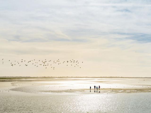 Baie de Somme_traversée de la baie à pied © Benoit Bremer