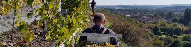 Haillicourt, Vignoble sur le terril ©CRTC Hauts-de-France - Maxime Truffaut