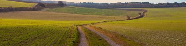 Chemin de la Via Francigena©hemis 1880945