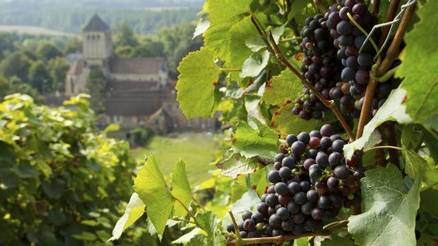 barzy sur marne_ vignoble de champagne _sud aisnechezy sur marne_ vendange de champagne© CRTC Hauts de France - Anne Sophie Flament