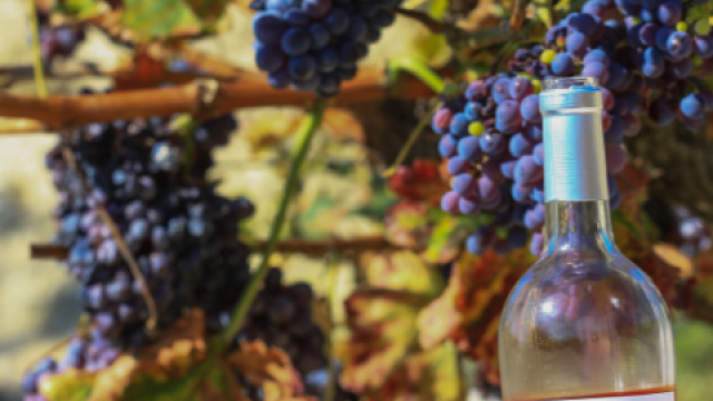 Bouteille De Vin Rose Copyright Hocquel Alain Vaucluse Provence 13860