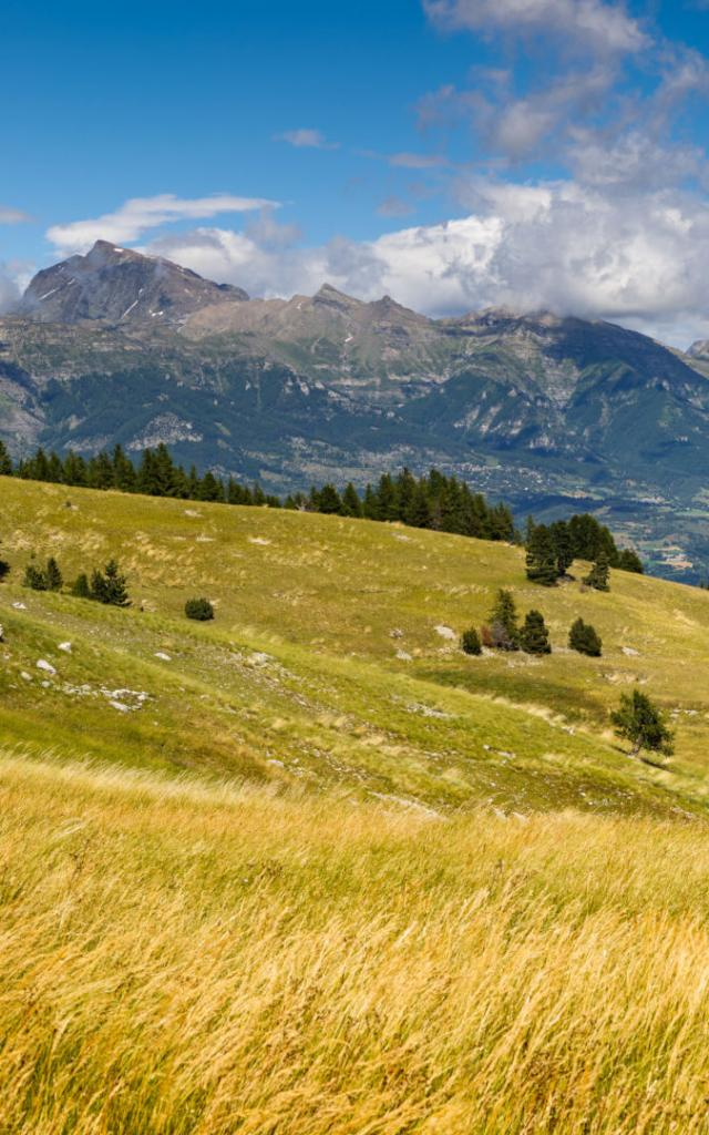 Panoramic view on the Champsaur Valley in summer from Gleize Pass. Hautes-Alpes, Southern French Alps, Paca Region, France