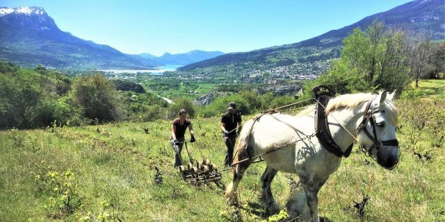 Culture Alpes Maxime Aerts