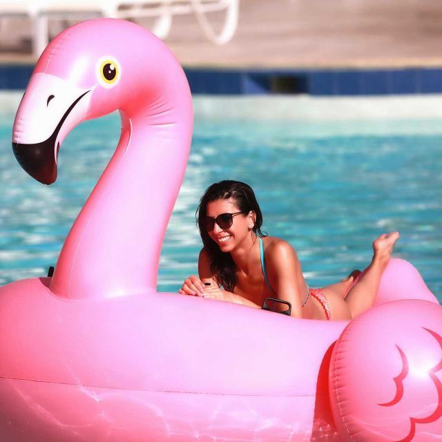 flamingo-3654498-1920-8.jpg