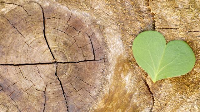 écologie et développement durable