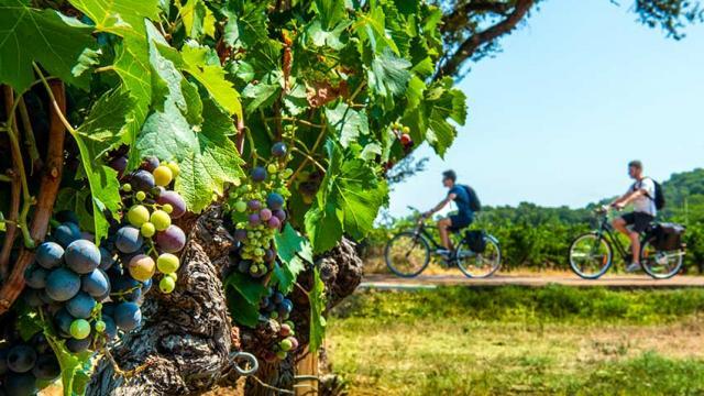 Itineraire Mediterrannee A Velo Vigne A Velo Dracenie Provence Verdon Tourisme 1