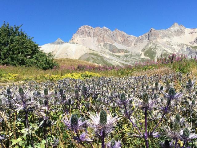 Jardin Du Lautaret Alpes Sajf Jvg Ppeghaire