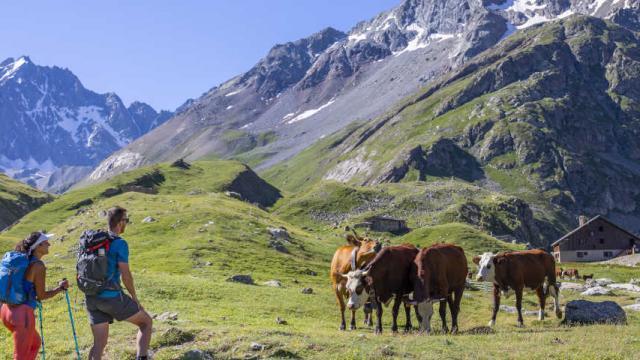 Tour du combeynot randonneurs vaches alpe de villar d'arène