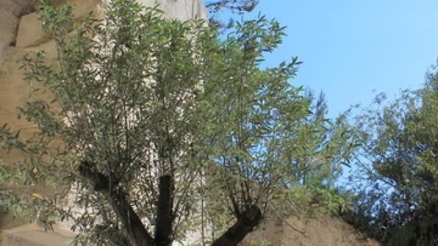 Les Baux De Provence C Chillio
