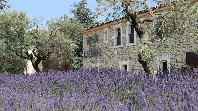 Musee Lavande Provence Dr