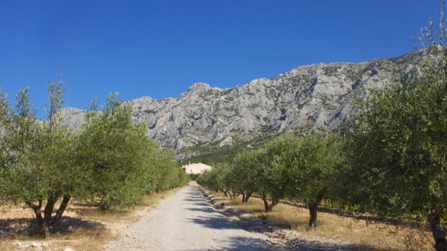Oliviers Alpilles Provence C Marchand