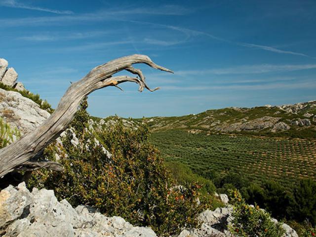 Parc Naturel Regional Alpilles Jms