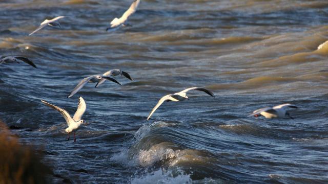 parc-ornithologique-camargue-paca-vinzi-vevrard-2.jpg