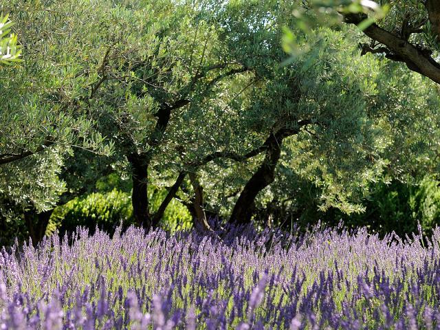 Parcs Naturels Regionaux Mas De Loulivie