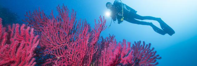plongee-sous-marine-f-launette-1.jpg