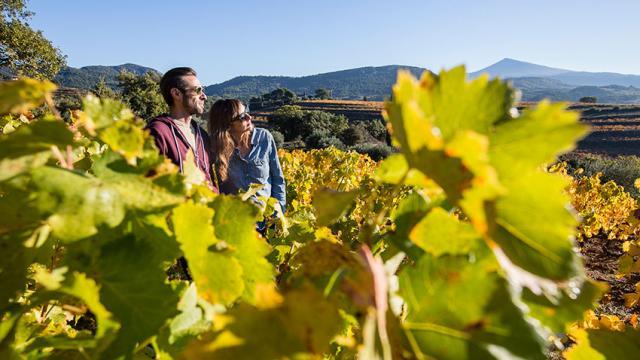 Provence Vigne Tseray