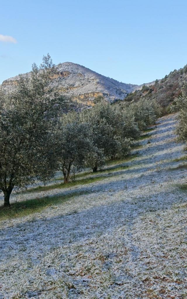 sahune-hiver-oliviers2-credits-pnrbp-2-1.jpg