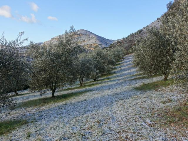 sahune-hiver-oliviers2-credits-pnrbp-2-2.jpg