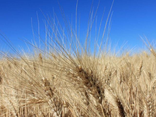 savoirfaire-agricole-champs-nature-paca-cchillio-2.jpg