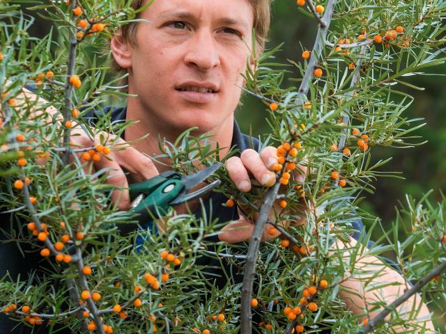 David Viveau agriculteur, producteur de baies d'argousier