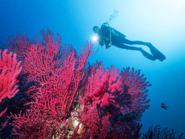 Baladesousmarine Mediterranee Flaunette