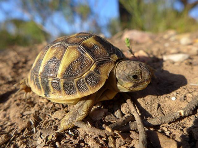 carnoules-village-tortues.jpg