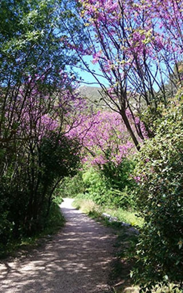 Chemin Saint Pons Gemenos Btriffaux