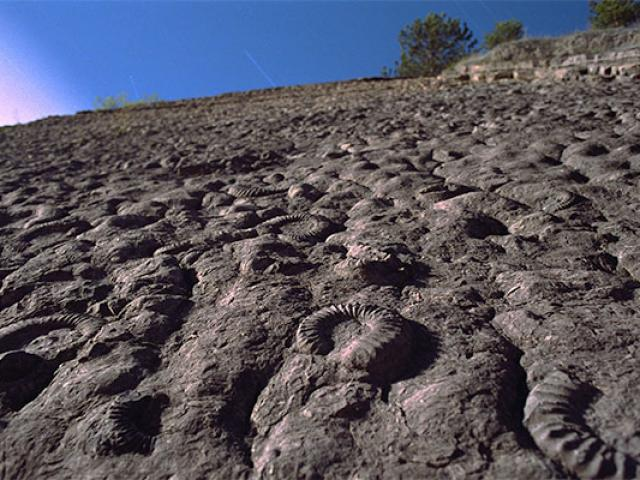 Dalle Amonites Balade Provence Pterraz