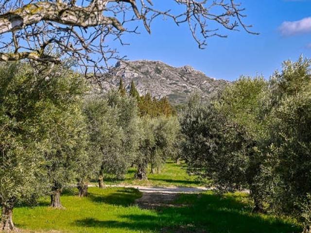 Ecotourisme Massif Alpilles Paca Pmagoni 1