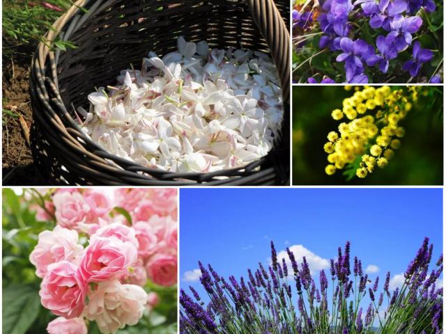 Galerie Fleurs Grasse Parfum Paca