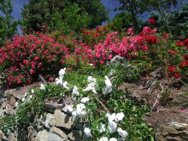 jardin-abbaye-valsaintes-association--athre.jpg