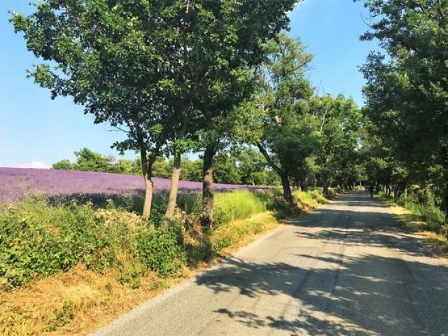 Lavande Route Lacesparron Provence Ylemagadure