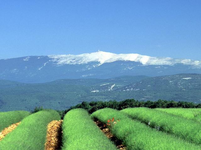 Mont Ventoux D Basse