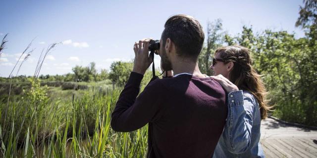 Observation Marais Vigueirat Tseray