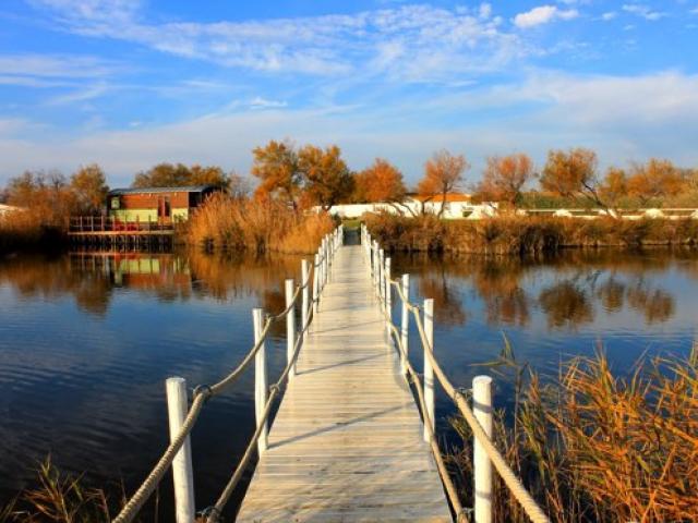 parc-naturel-regional-camargue-cchillio.jpg
