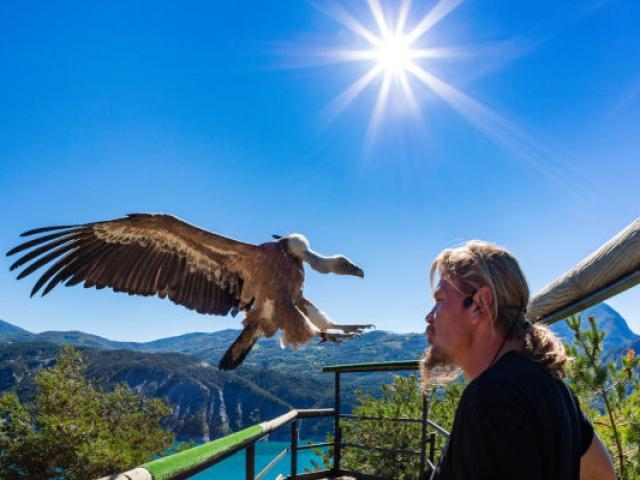 Parc animalier de Serre-Ponçon, vautour fauve, Gyps fulvus