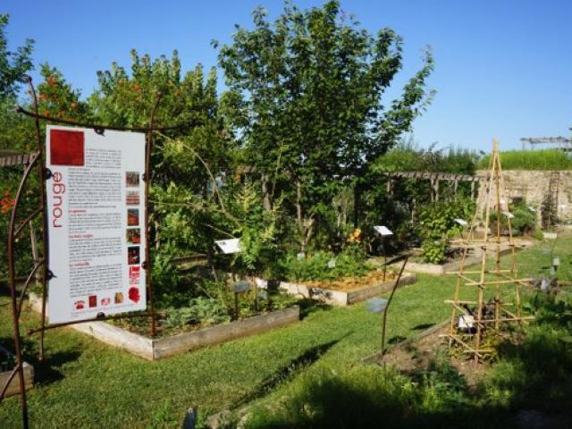 parcs-jardins-provence-couleur-garance.jpg